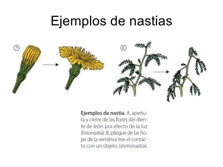 Tema 12 la relacion y la reproduccion en las plantas for Que son plantas ornamentales ejemplos