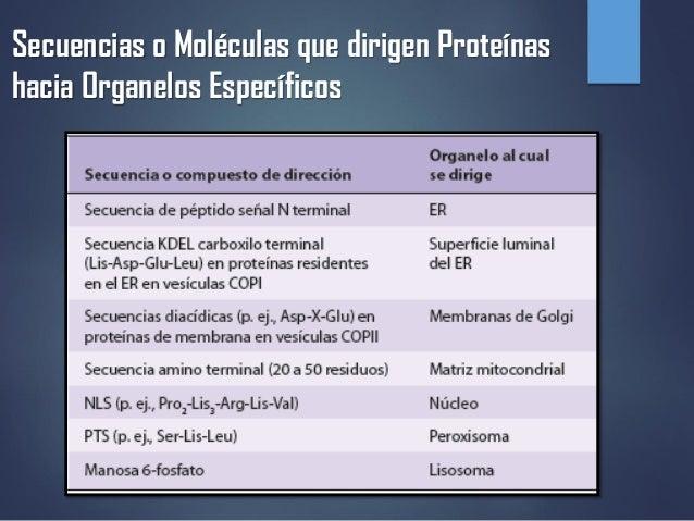 TRAFICO Y DISTRIBUCIÓN INTRACELULARES DE PROTEÍNAS  Slide 2