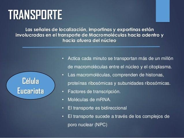 TRANSPORTE Las señales de localización, importinas y exportinas están involucradas en el transporte de Macromoléculas haci...
