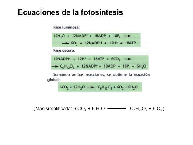 Fotosintesis y su ecuacion 75