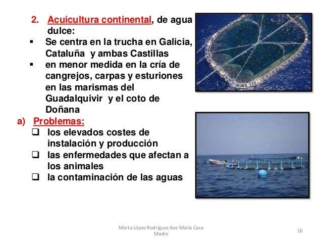 Tema 14 la actividad pesquera en espa a for Criadero de carpas