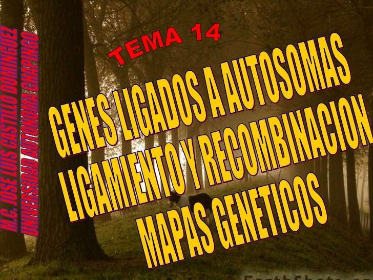 TEMA 14 GENES LIGADOS A AUTOSOMAS LIGAMIENTO Y RECOMBINACION MAPAS GENETICOS M.C. JOSE LUIS CASTILLO DOMINGUEZ UNIVERSIDAD...
