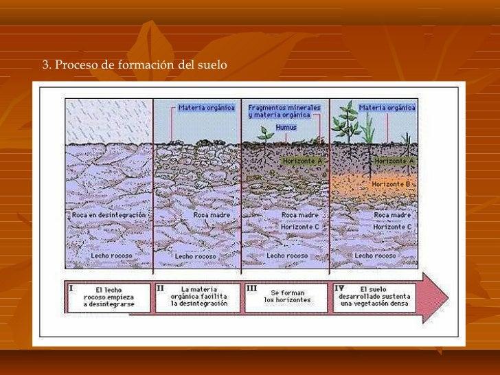 Suelo for Proceso de formacion del suelo