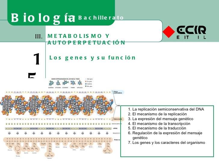 METABOLISMO Y AUTOPERPETUACIÓN III. 15 Los genes y su función Biología 2º Bachillerato 1. La replicación semiconservativa ...