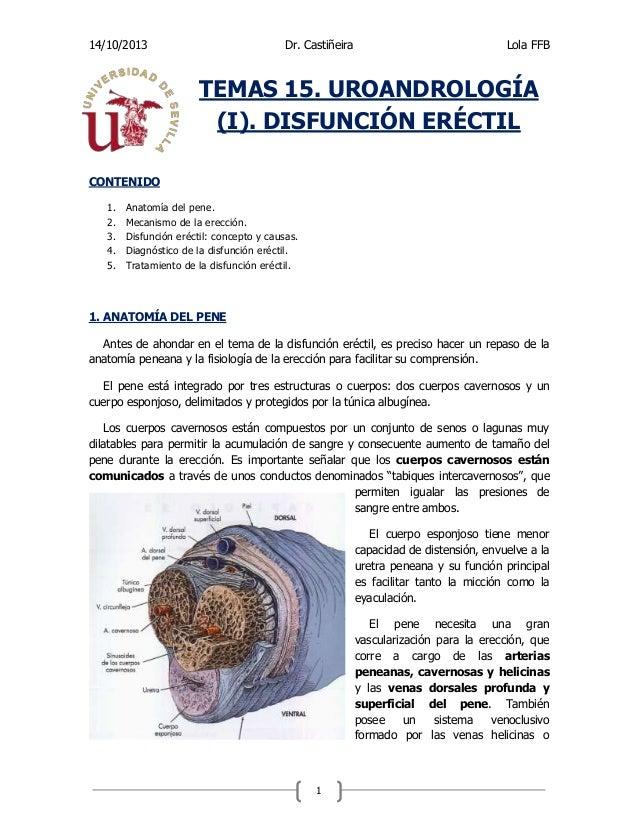 Tema 15. UROANDROLOGÍA (I). DISFUNCIÓN ERÉCTIL. Patología quirúrgica.…