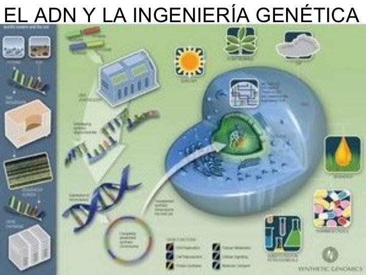 Worksheet. Tema 16 adn y la ingenieria genetica