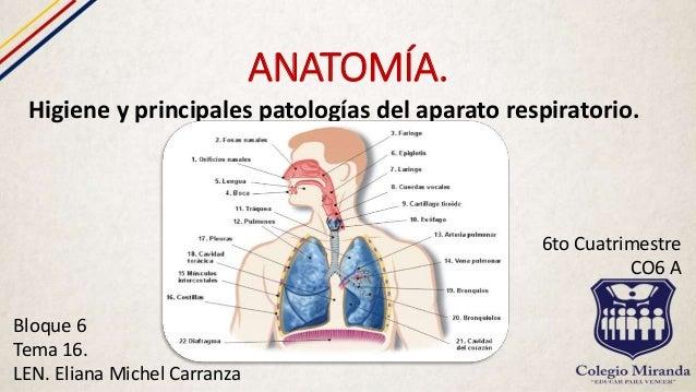 Higiene Del Sistema Respiratorio: Higiene Y Principales Patologías Del Aparato Respiratorio