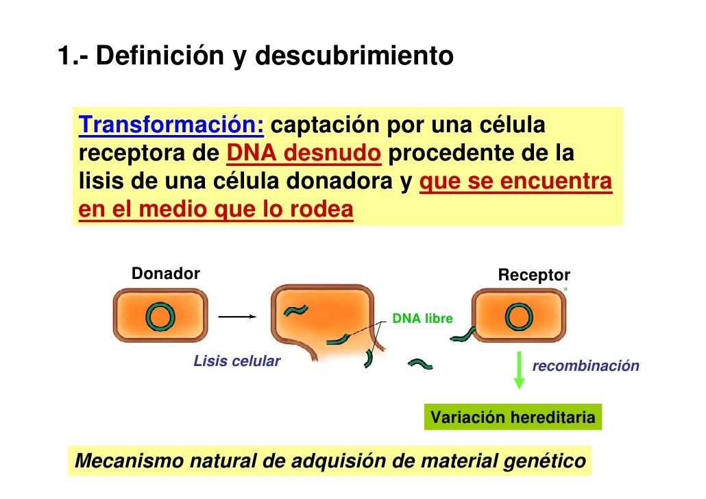Recombinacin bacteriana essay