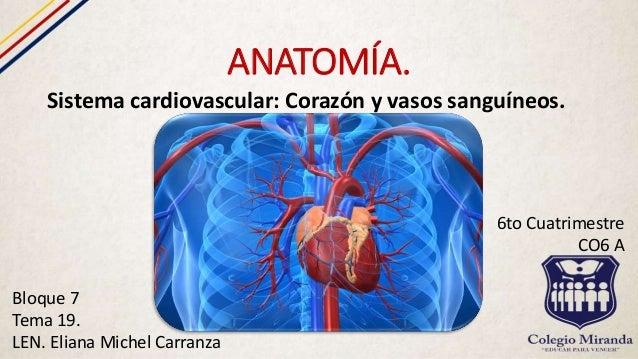 Sistema circulatorio: Corazón y vasos sanguíneos,