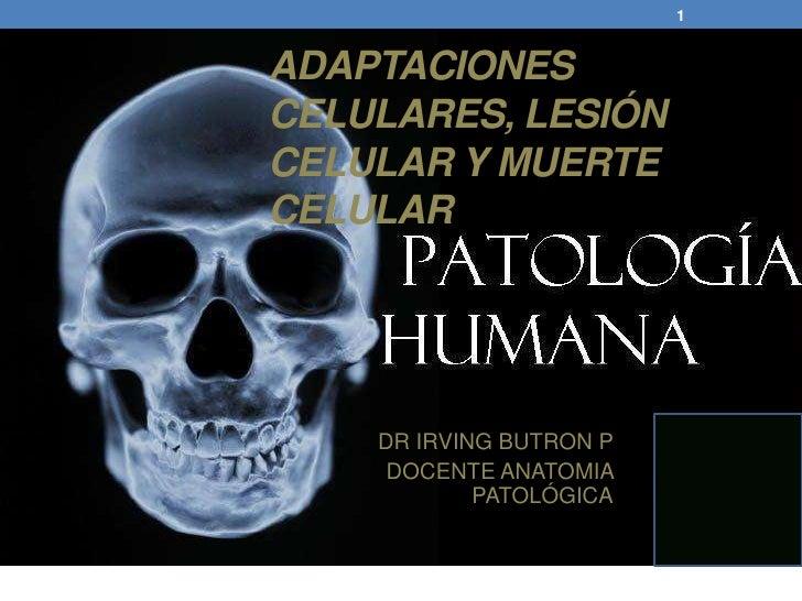 1ADAPTACIONESCELULARES, LESIÓNCELULAR Y MUERTECELULAR    DR IRVING BUTRON P     DOCENTE ANATOMIA            PATOLÓGICA