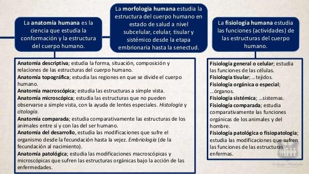 Generalidades anatomía.
