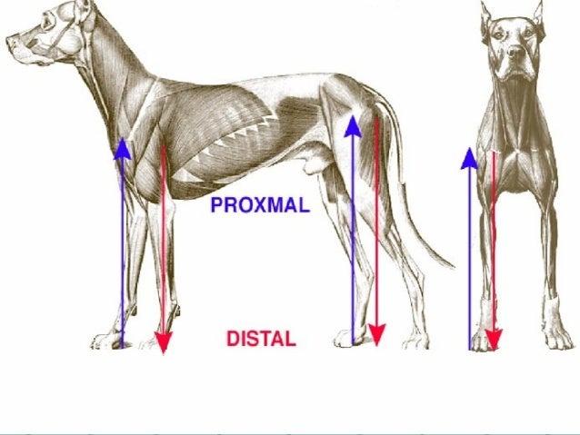 Tema 1 anatomia copia