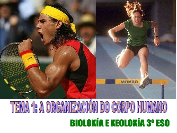 TEMA 1: A ORGANIZACIÓN DO CORPO HUMANO BIOLOXÍA E XEOLOXÍA 3º ESO