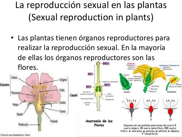 Tipos de plantas q se reproducen sexualmente