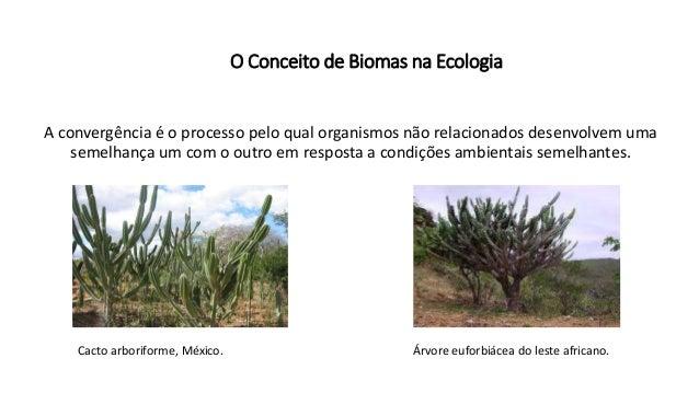 O Conceito de Biomas na Ecologia A convergência é o processo pelo qual organismos não relacionados desenvolvem uma semelha...