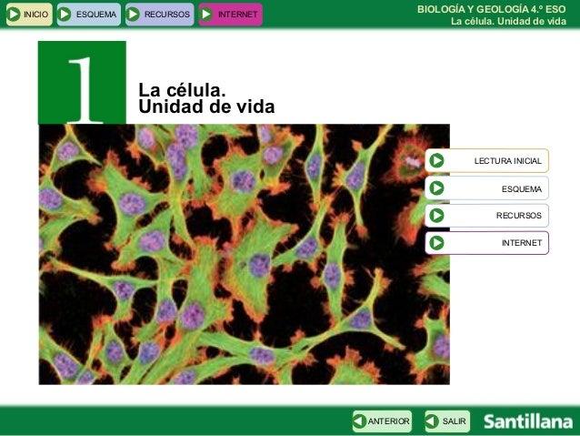 BIOLOGÍA Y GEOLOGÍA 4.º ESO La célula. Unidad de vida INICIO ESQUEMA RECURSOS INTERNET SALIRANTERIOR LECTURA INICIAL ESQUE...