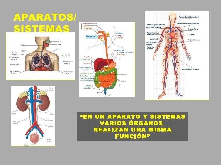 Tema 1 Organización Del Cuerpo Humano