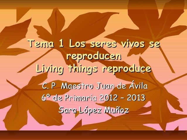 Tema 1 Los seres vivos se        reproducen Living things reproduce  C. P Maestro Juan de Ávila  6º de Primaria 2012 – 201...