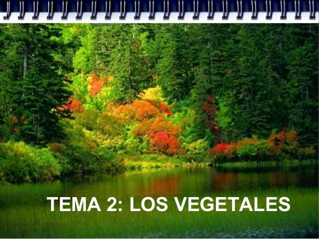 TEMA 2: LOS VEGETALES
