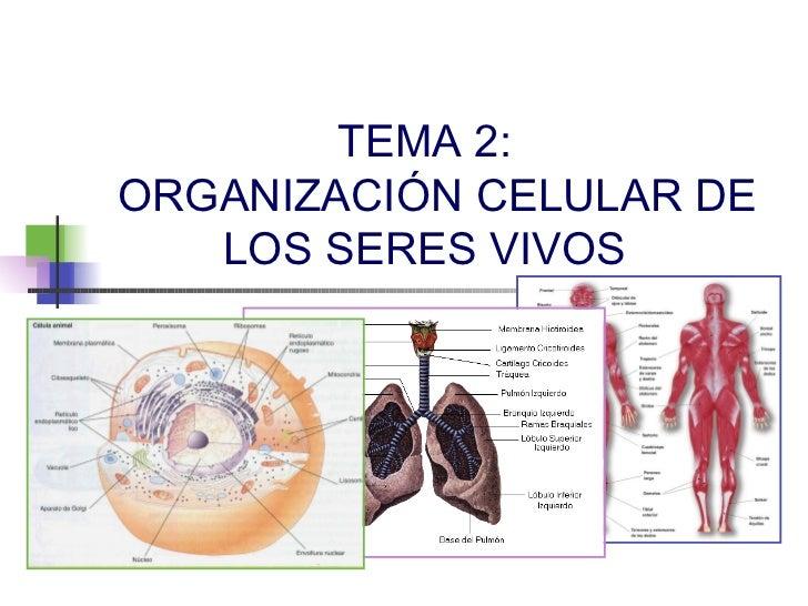 TEMA 2:ORGANIZACIÓN CELULAR DE   LOS SERES VIVOS