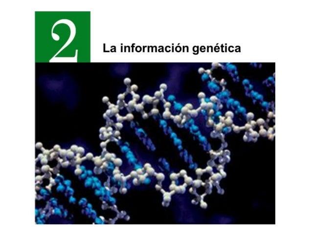 1.-Los ácidos nucleicos Almacenan y transmiten la información genética Controla el funcionamiento celular Suministra infor...