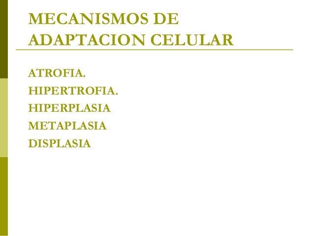 Tema 2 enfermeria ufp canarias for Administracion de fincas torrevieja