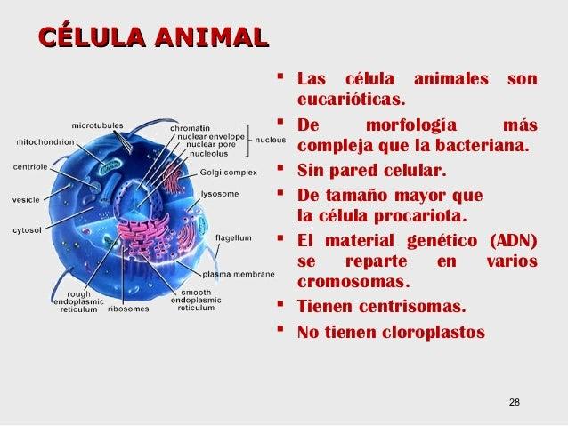 T ema2. microorganismos y la célula