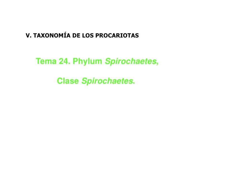 V. TAXONOMÍA DE LOS PROCARIOTAS  Tema 24. Phylum Spirochaetes,        Clase Spirochaetes.