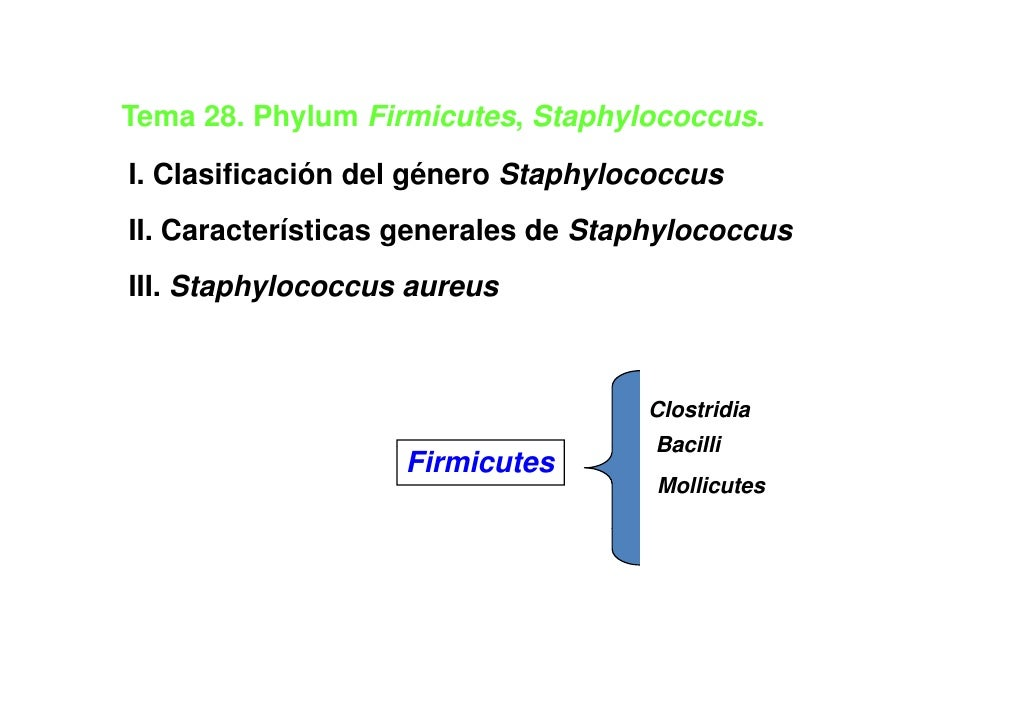 Tema 28 Phylum Firmicutes Staphylococcus     28.       Firmicutes, Staphylococcus.I. Clasificación del género Staphylococc...