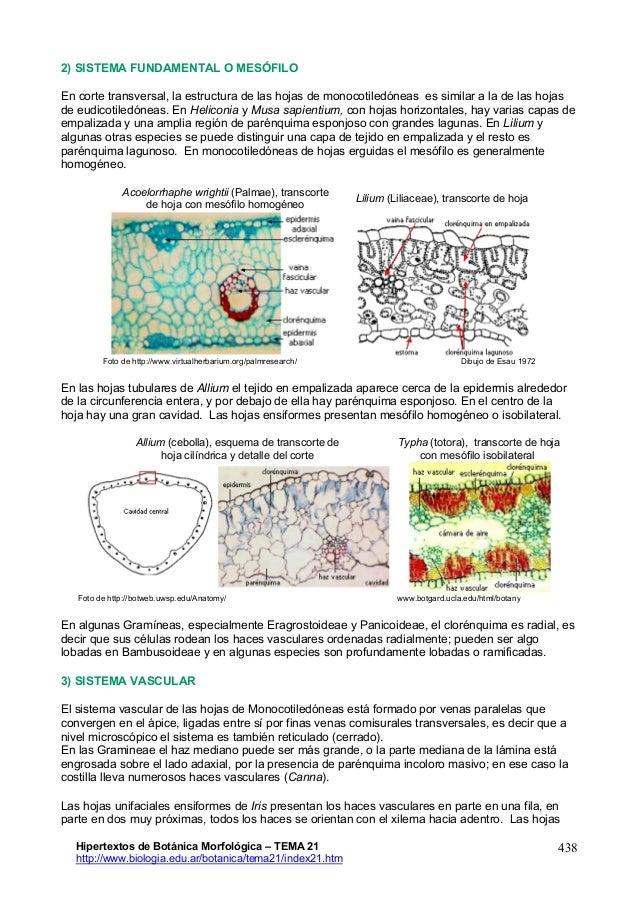 Perfecto Hoja Diagrama Anatomía Fotos - Anatomía de Las Imágenesdel ...