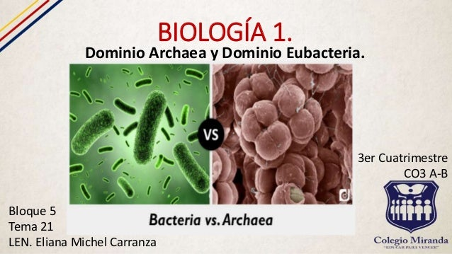 Dominio bacteria reproduccion asexual