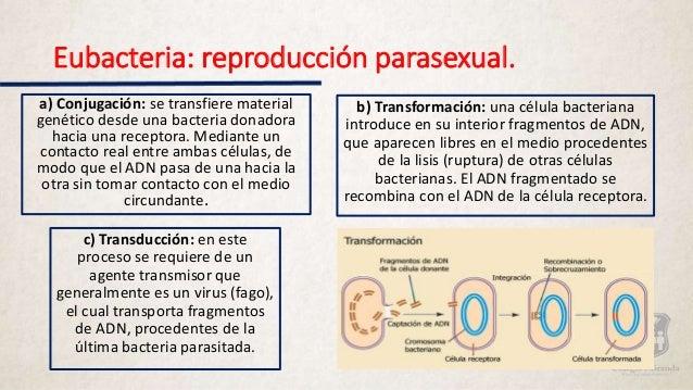 Formas de reproduccion parasexual en bacterias