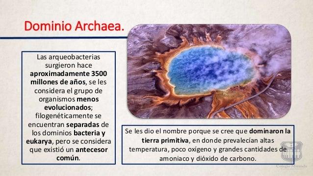 Resultado de imagen de dominio Archaea,