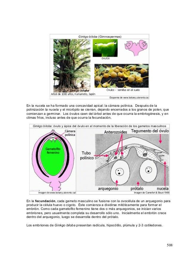 Tema24 -Embriogénesis. Anatomía de Semilla y Fruto.