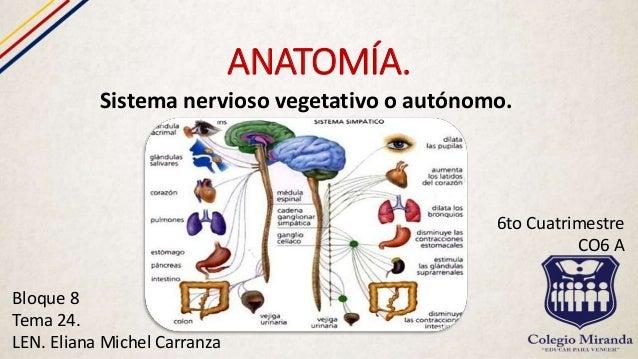 Sistema Nervioso Vegetativo.
