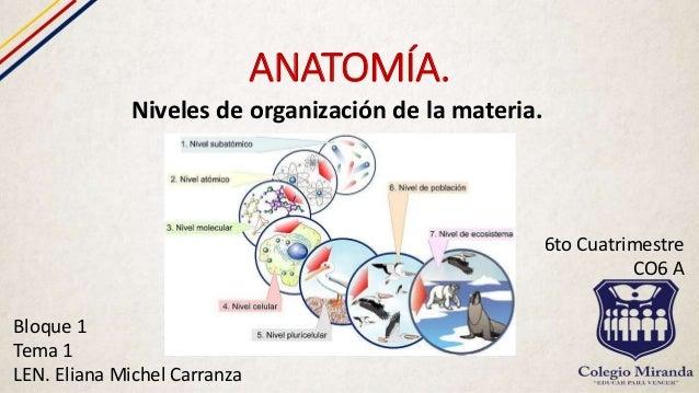 Niveles de organización de la materia.
