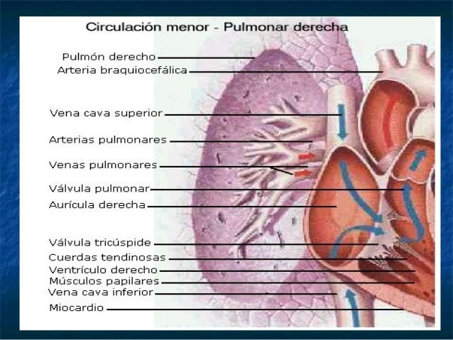Tema 2 anatomia