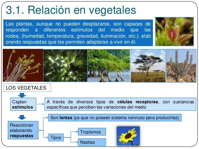 3.1. Relación en vegetales Las plantas, aunque no pueden desplazarse, son capaces de responden a diferentes estímulos del ...