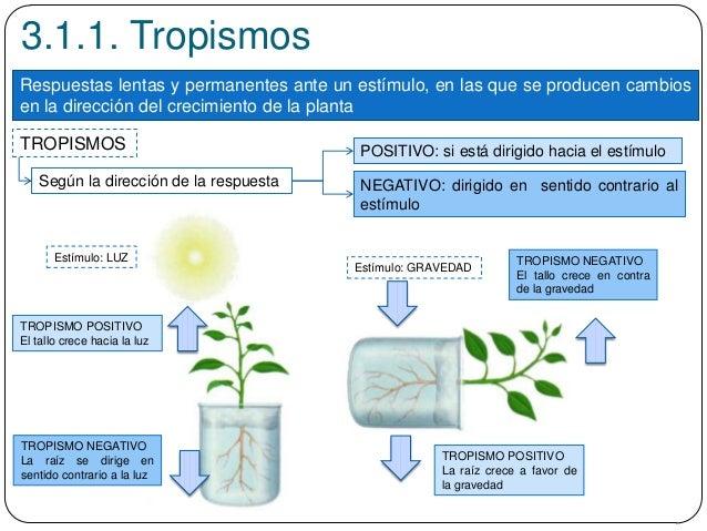 3.1.1. Tropismos Respuestas lentas y permanentes ante un estímulo, en las que se producen cambios en la dirección del crec...