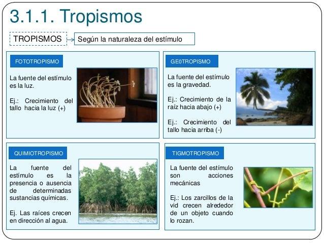 3.1.1. Tropismos Según la naturaleza del estímuloTROPISMOS TIGMOTROPISMO FOTOTROPISMO GE0TROPISMO QUIMIOTROPISMO La fuente...