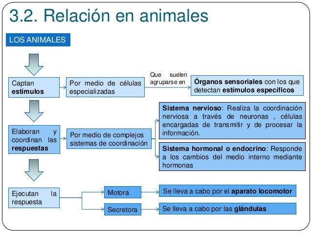 3.2. Relación en animales LOS ANIMALES Captan estímulos Por medio de células especializadas Órganos sensoriales con los qu...