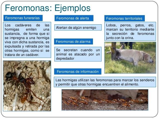 Feromonas: Ejemplos Feromonas funerarias Las hormigas utilizan las feromonas para marcar los senderos y permitir que otras...