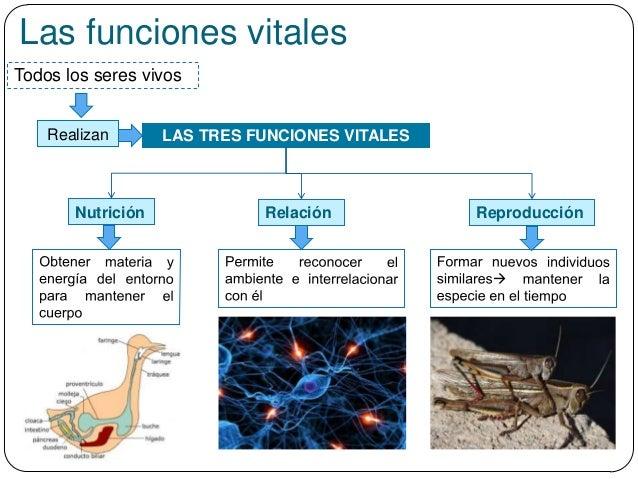 Las funciones vitales Todos los seres vivos Realizan LAS TRES FUNCIONES VITALES Nutrición Relación Reproducción