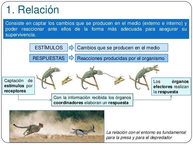 1. Relación Consiste en captar los cambios que se producen en el medio (externo e interno) y poder reaccionar ante ellos d...