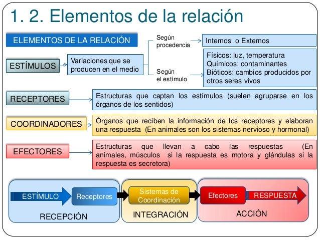 1. 2. Elementos de la relación Estructuras que llevan a cabo las respuestas (En animales, músculos si la respuesta es moto...