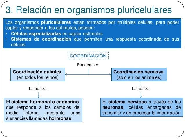 3. Relación en organismos pluricelulares Los organismos pluricelulares están formados por múltiples células, para poder ca...