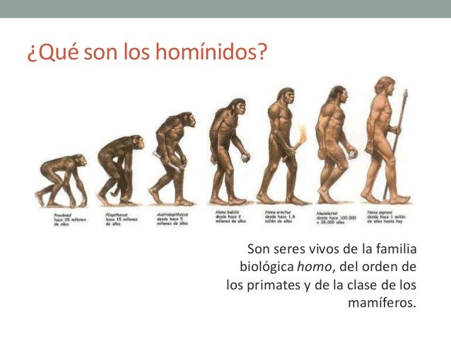 Clasificacion taxonomica del hombre yahoo dating 5