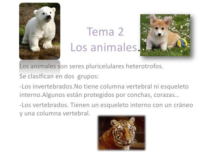 Tema 2 Los animales.<br />Los animales son seres pluricelulares heterotrofos. <br />Se clasifican en dos  grupos:<br /><ul...