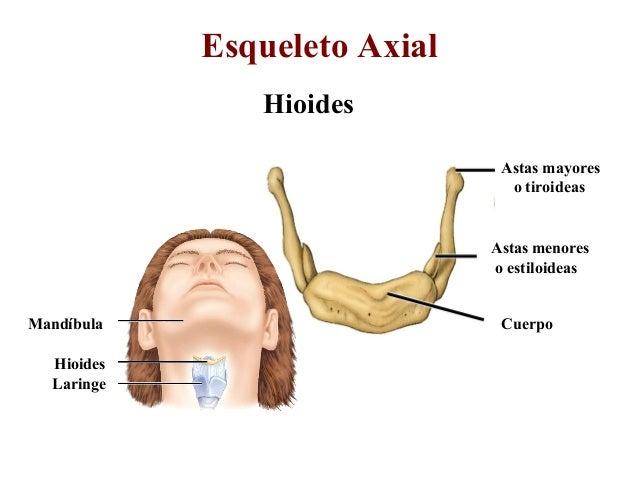 sistema Oseo en Anatomia