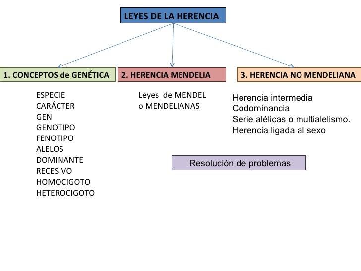 ESPECIE CARÁCTER GEN GENOTIPO FENOTIPO ALELOS DOMINANTE RECESIVO HOMOCIGOTO HETEROCIGOTO 1. CONCEPTOS de GENÉTICA LEYES DE...